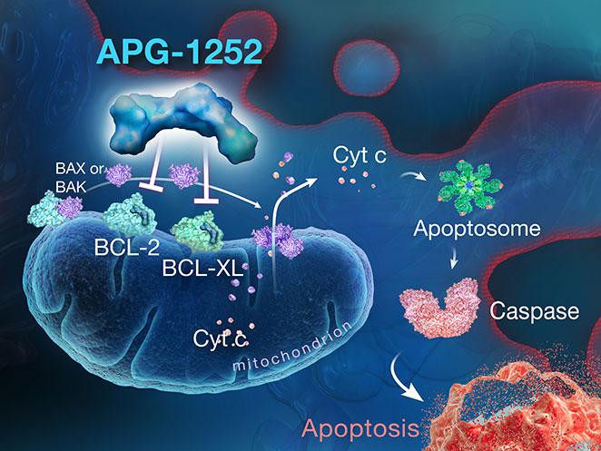 APG-1252