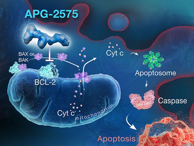APG-2575